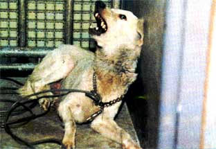 発症 狂犬病